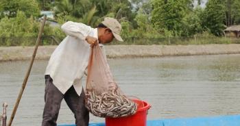 """Nghề nuôi cá kèo """"sống khỏe"""" dịp Tết, """"bỏ túi"""" cả chục triệu đồng mỗi ngày"""