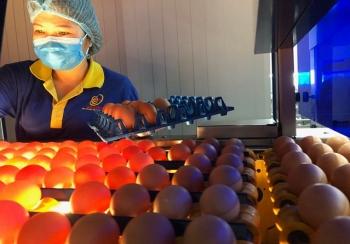 Ngành nông nghiệp: Liên kết chuỗi để phát triển bền vững