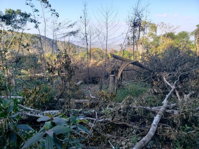 10 năm, hơn 22.000 ha rừng tại 4 lâm trường bị tàn phá - 1