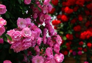 Tử vi ngày 11/5/2021: Tuổi Ngọ tạo sự đột phá, tuổi Dậu đường trải hoa hồng