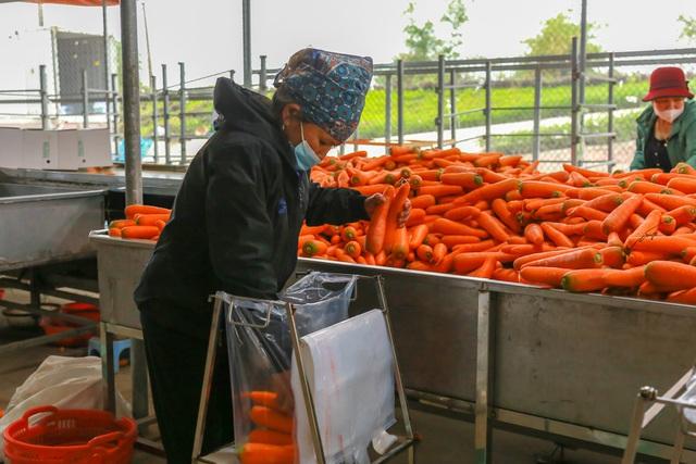 Hải Dương: Cà rốt