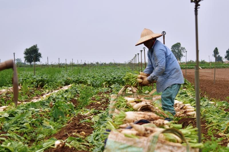 """""""Giải cứu"""" nông sản - bài học  quản trị ngay từ vạch xuất phát"""