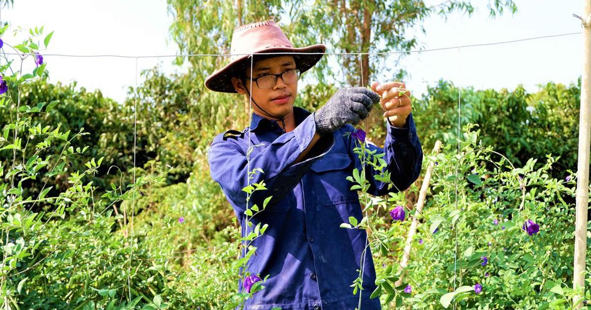 """Chàng trai trẻ """"biến"""" đất khô cằn thành nông trại dược liệu"""