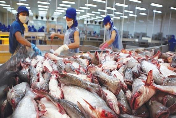 """Trung Quốc rời """"ngôi vương"""" nhập khẩu cá tra của Việt Nam"""