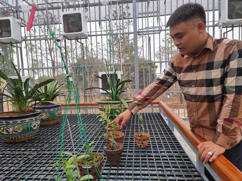 Giao dịch lan đột biến Ngọc Sơn Cước 250 tỷ đồng: Chủ vườn lan nói gì?