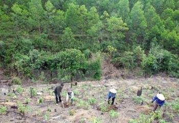Diện tích trồng rừng quý I/2021 tăng hơn 100%