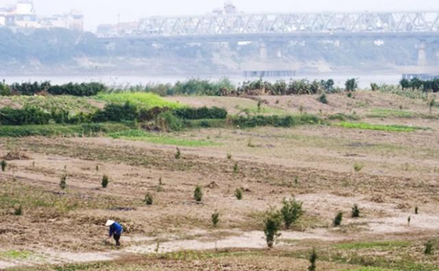 Hà Nội chỉ đạo thu hồi đất bãi sông sử dụng sai mục đích