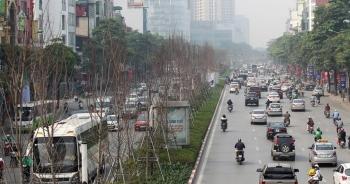 Hà Nội bỏ toàn bộ cây phong lá đỏ trên đường Nguyễn Chí Thanh