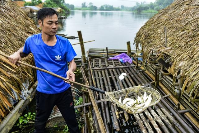 Thủy sản chết bất thường hàng loạt, dân khốn khổ tìm nơi lánh nạn cho cá - 5
