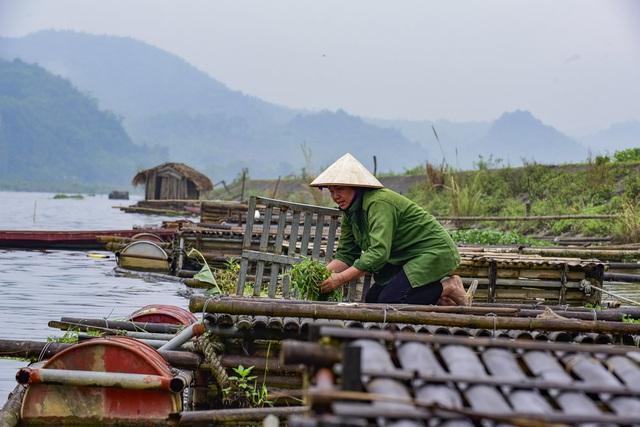 Thủy sản chết bất thường hàng loạt, dân khốn khổ tìm nơi lánh nạn cho cá - 4