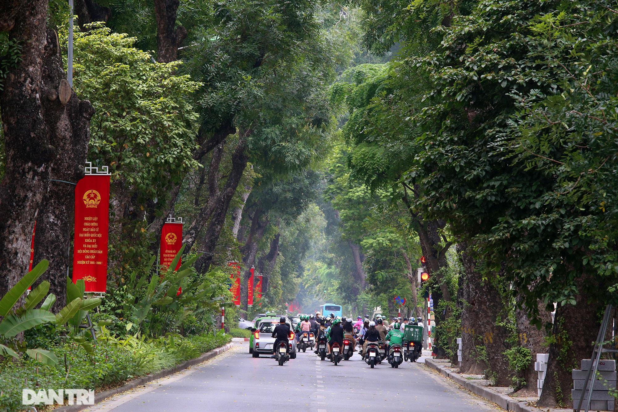 Những hàng cây xanh được quy hoạch hơn 100 năm trước ở Hà Nội giờ ra sao? - 8