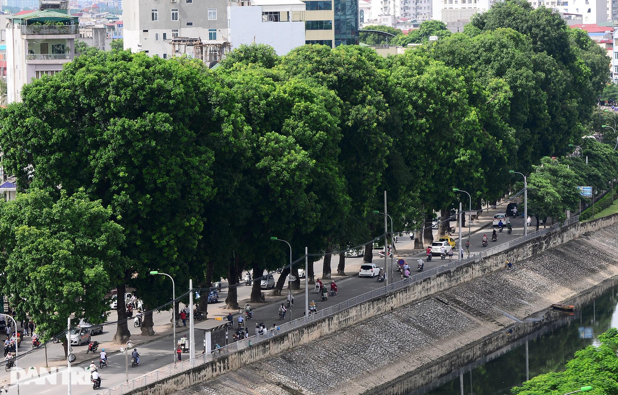 Những hàng cây xanh được quy hoạch hơn 100 năm trước ở Hà Nội giờ ra sao? - 14