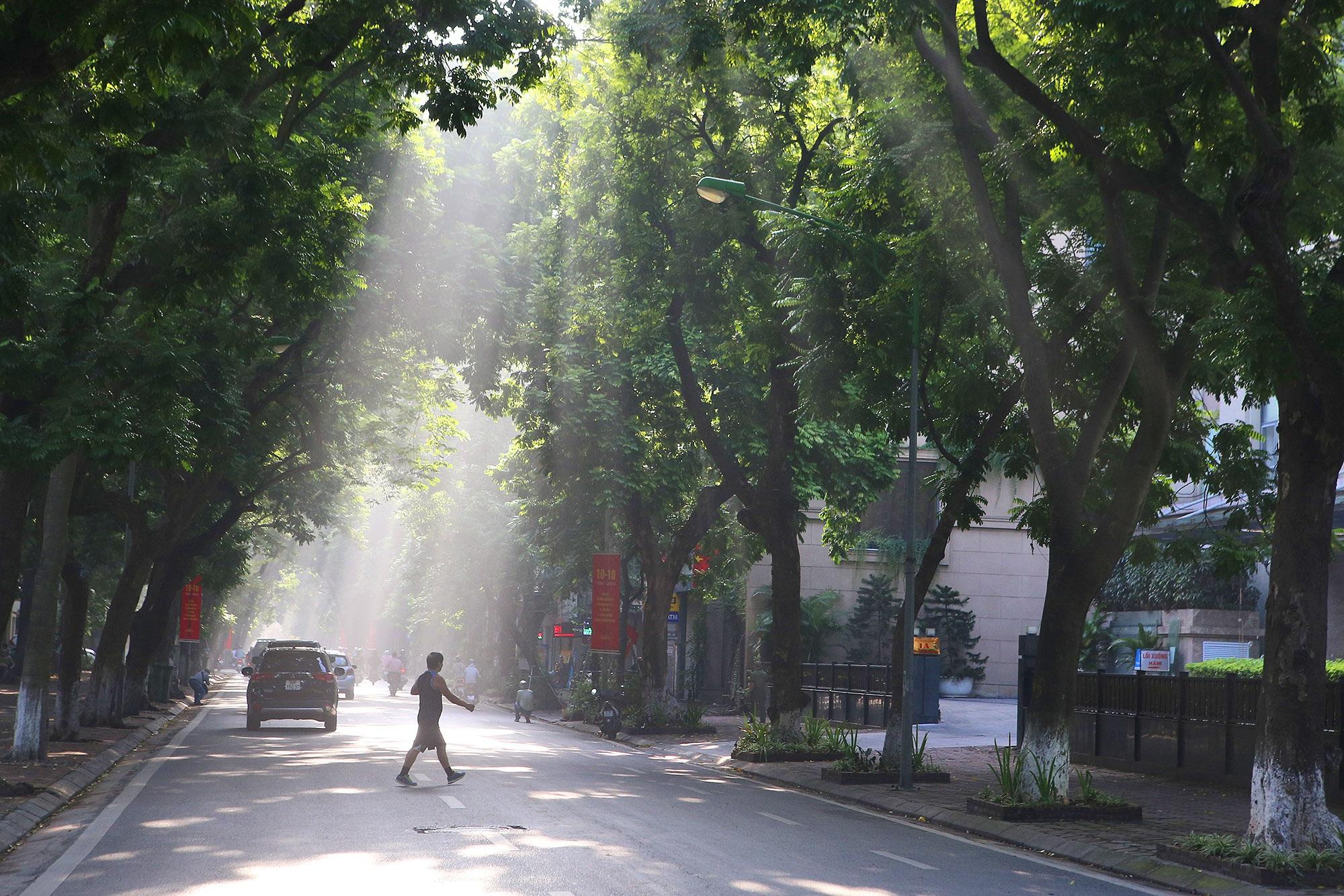 Những hàng cây xanh được quy hoạch hơn 100 năm trước ở Hà Nội giờ ra sao? - 6