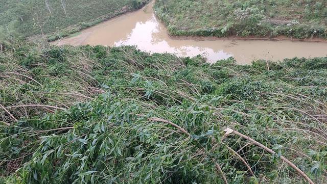 Trên địa bàn 2 xã Cao Sơn và Lĩnh Sơn không có thiệt hại về nhà cửa nhưng hàng chục ha hoa màu và cây nguyên liệu bị gãy đổ, hư hỏng.
