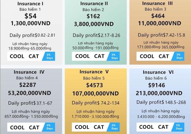Bỏ tiền tỷ, vay nặng lãi đầu tư Coolcat: Người chơi chết đứng khi sàn sập - 3