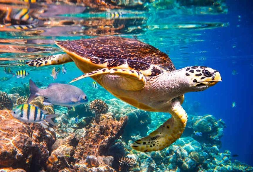 Khoảng 25% các loài trên toàn cầu đang bị đe dọa tuyệt chủng
