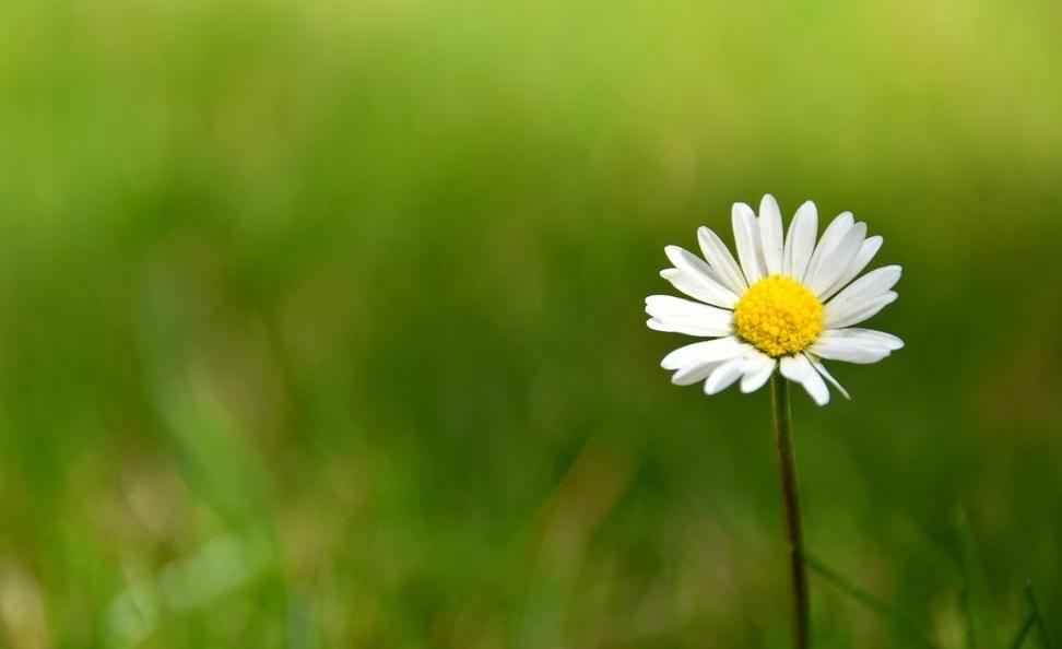 Tử vi ngày 18/4/2021: Tuổi Mão phải chịu thiệt thòi, tuổi Mùi cơ hội rộng mở