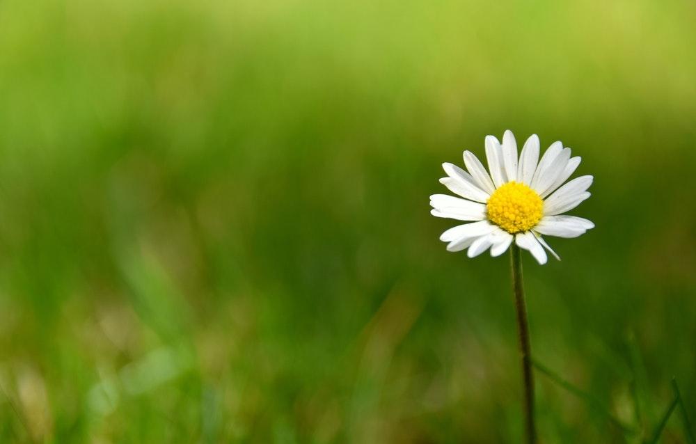 Tử vi ngày 18/4/2021: Tuổi Mão dễ phải thiệt thòi, tuổi Mùi cơ hội rộng mở