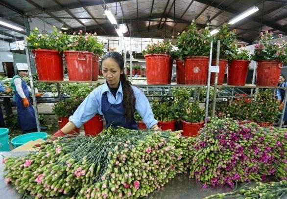 Đà Lạt quyết định xây dựng trung tâm giao dịch hoa