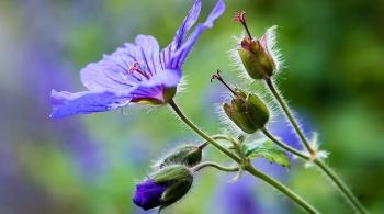 tu vi ngay 1862019 tuoi suu ruoc hoa vao than tuoi dau tai loc doi dao