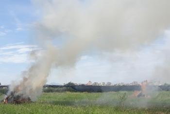 Bộ TN&MT yêu cầu xử lý nghiêm hành vi đốt rơm rạ không đúng quy định