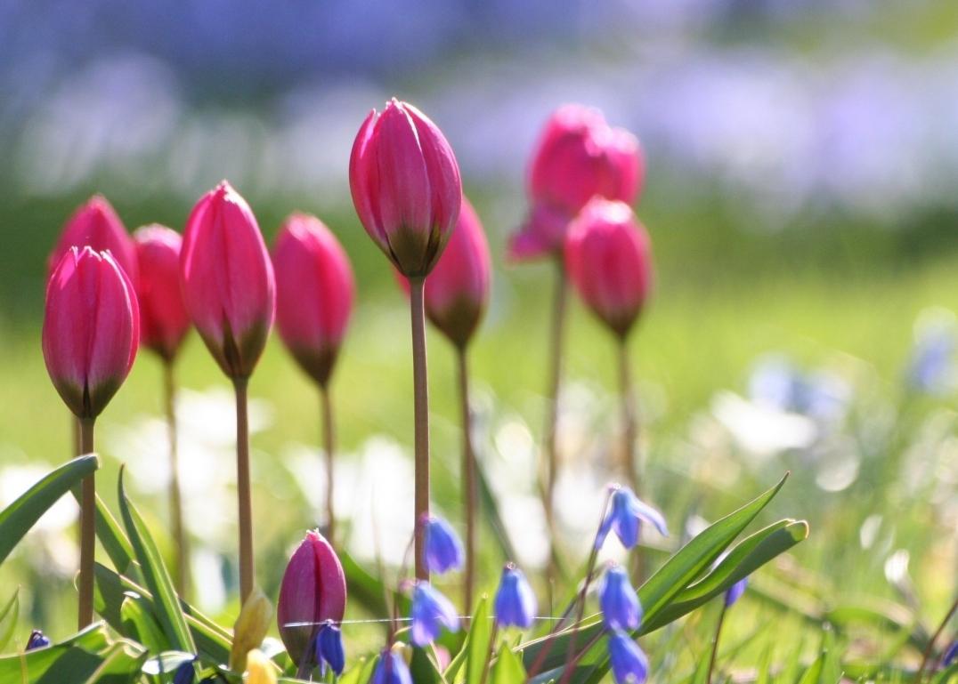 tu vi tuan moi 157 217 tuoi dau hung tinh ap den tuoi hoi tranh duoc hiem hoa