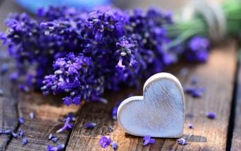 Tử vi ngày 4/8/2019: Tuổi Dần cần tránh thị phi, tuổi Dậu đào hoa nở rộ
