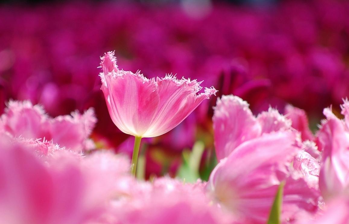 tu vi tuan moi 198 258 tuoi mao phong hoa hao tai tuoi dau tinh duyen tham sac