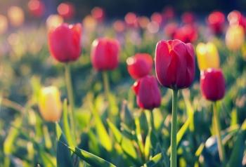Tử vi ngày 14/5/2021: Tuổi Tỵ cơ may tiền bạc, tuổi Ngọ hành trình thú vị