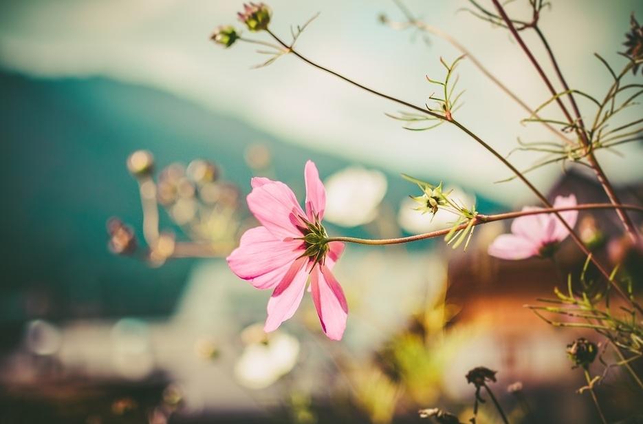 Tử vi ngày 15/4/2021: Tuổi Thìn đón nhận tin vui, tuổi Hợi vướng phải thị phi