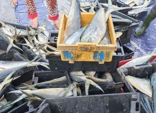 """Nghề cá bị đe dọa bởi """"nguy cơ kép"""" từ biến đổi khí hậu"""
