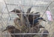 Ninh Bình cấm cán bộ, công chức ăn thịt động vật rừng và chim hoang dã