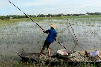 Nông dân miền Tây chật vật mưu sinh mùa nước lũ