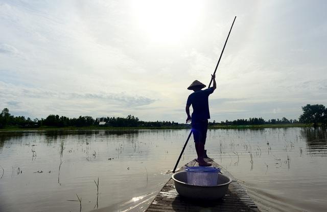 Nông dân miền Tây chật vật mưu sinh mùa nước lũ - 1