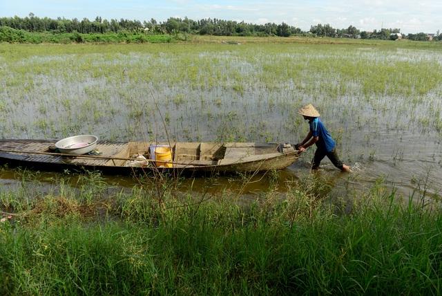 Nông dân miền Tây chật vật mưu sinh mùa nước lũ - 2