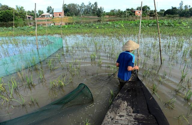 Nông dân miền Tây chật vật mưu sinh mùa nước lũ - 4