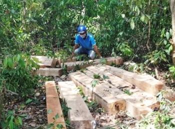 Rừng trồng mới giảm nhưng diện tích bị phá tăng hơn 45%