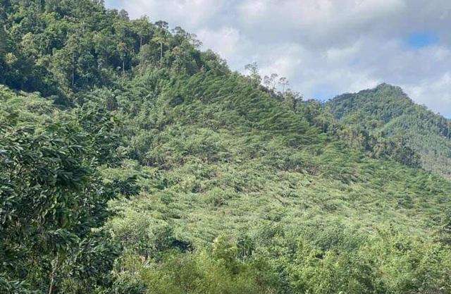 Huyện miền núi ở Thừa Thiên Huế có nguy cơ sạt lở - 3