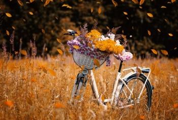 Tử vi tuần mới 11/10 - 17/10: Tuổi Thìn vượt mọi trắc trở, tuổi Hợi tốt xấu đan xen