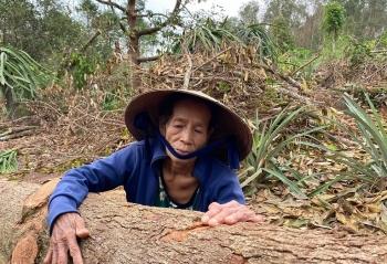 """Quảng Ngãi: """"Thủ phủ"""" cây ăn quả thất thủ sau mưa bão"""