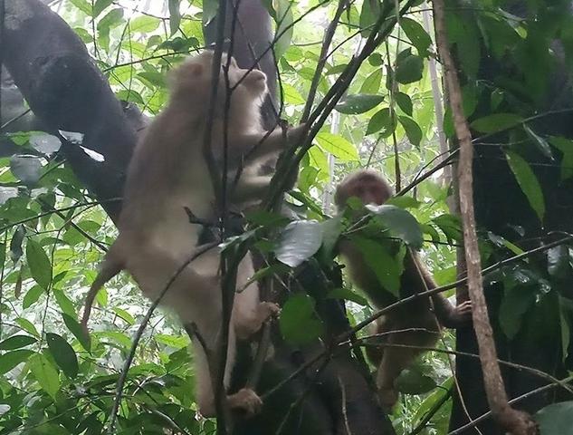 Thả 28 cá thể động vật hoang dã về môi trường tự nhiên
