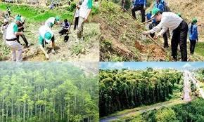 Các địa phương tăng cường bảo vệ, phát triển rừng bền vững