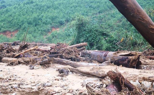 Gần 150.000ha rừng bị thiệt hại do thiên tai