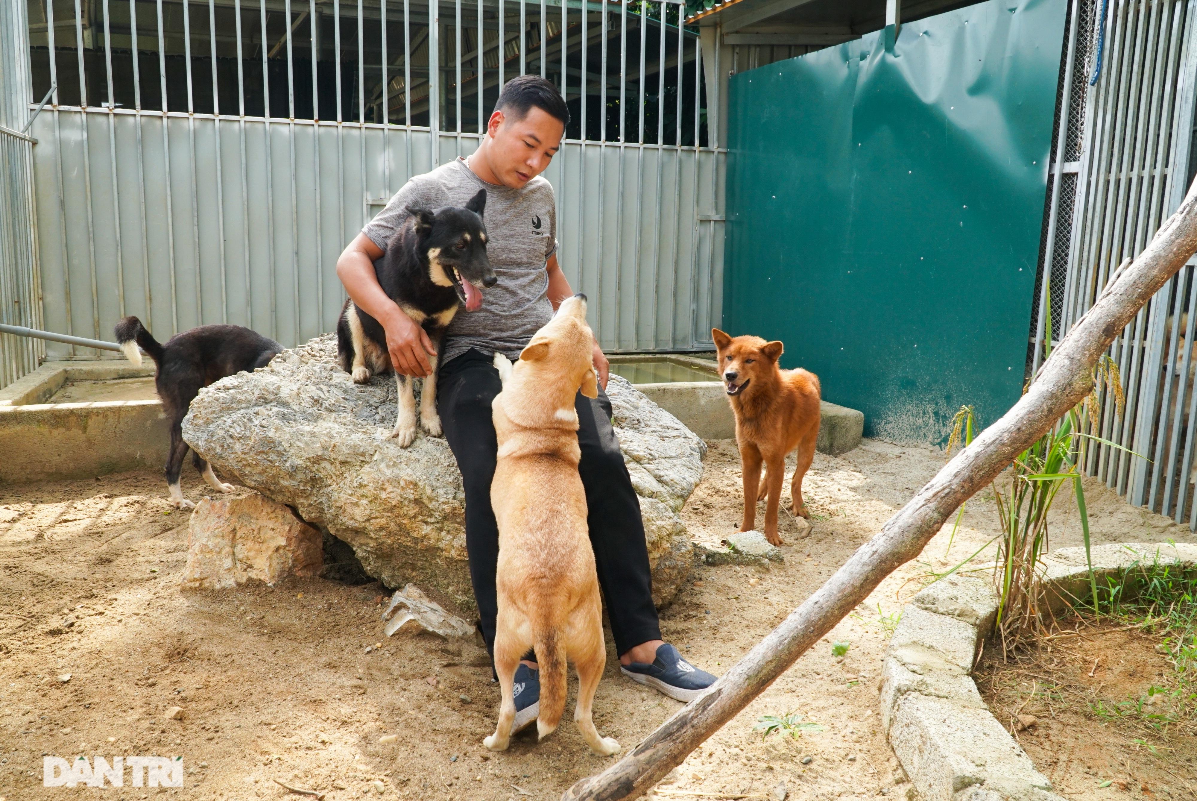 Hồi sinh giống chó săn cổ quý hiếm lừng danh đất Việt - 1