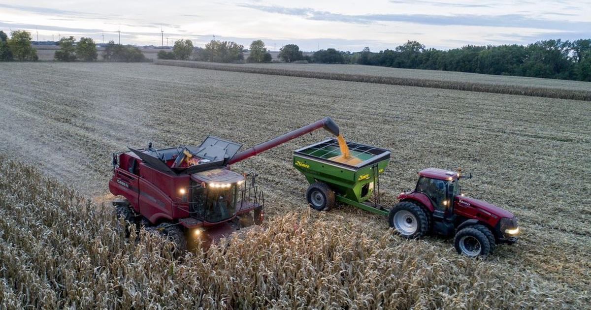 Thương chiến khiến nông sản Mỹ - Trung ngày càng phụ thuộc lẫn nhau