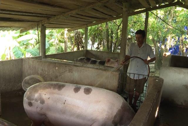Người chăn nuôi thấp thỏm khi đàn lợn Tết đối diện nguy cơ dịch tả châu Phi - 4