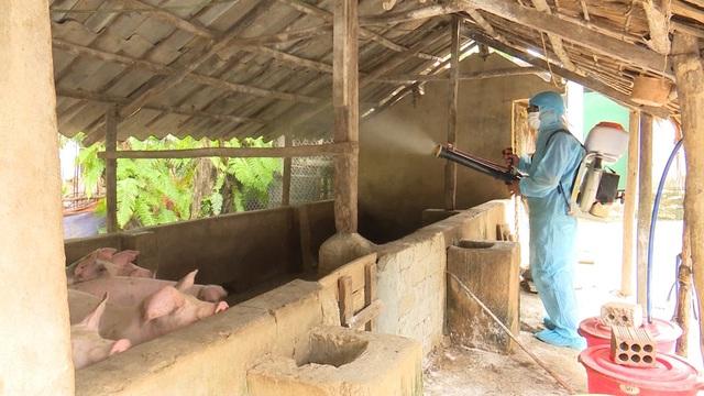 Người chăn nuôi thấp thỏm khi đàn lợn Tết đối diện nguy cơ dịch tả châu Phi - 5