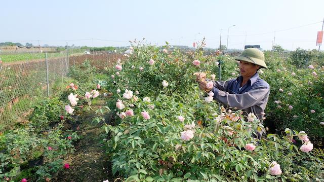 10 năm thực hiện Kết luận số 61 của Ban Bí thư: Hơn 27.000 nông dân trở thành tỷ phú