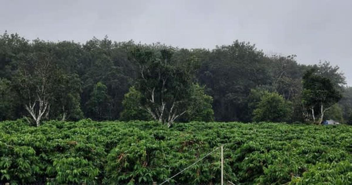 Báo Nhật: Giá nông sản Việt Nam sẽ tăng đột biến do ảnh hưởng của bão lụt