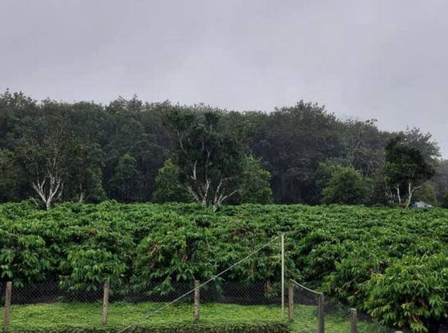 Báo Nhật: Giá nông sản Việt Nam sẽ tăng đột biến do ảnh hưởng của bão lụt - 2